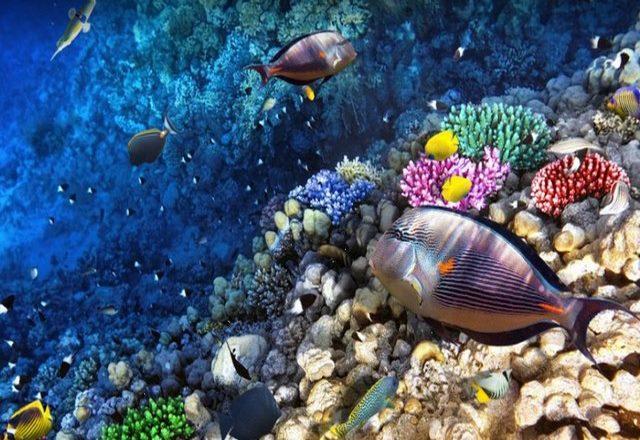 جزر هونولولو