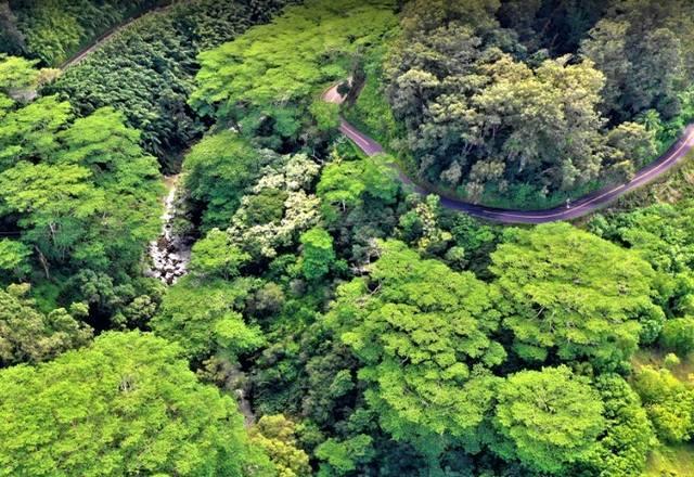 ماوي في جزر هاواي