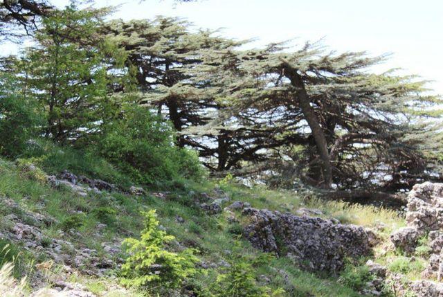 اجمل الاماكن الطبيعية في لبنان