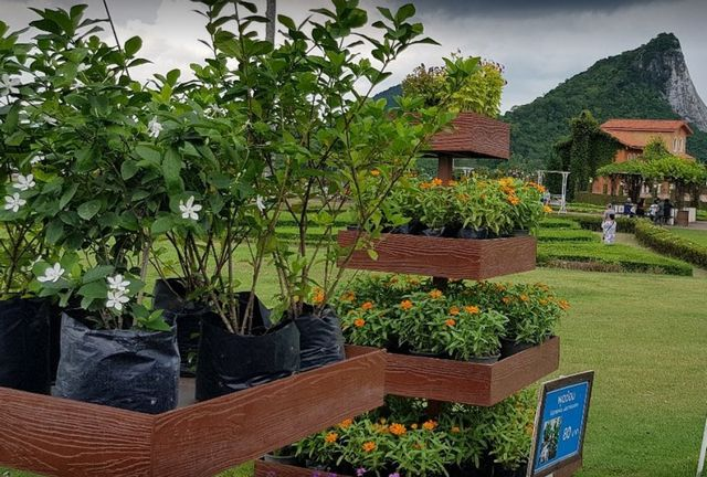 حديقة العنب في بتايا