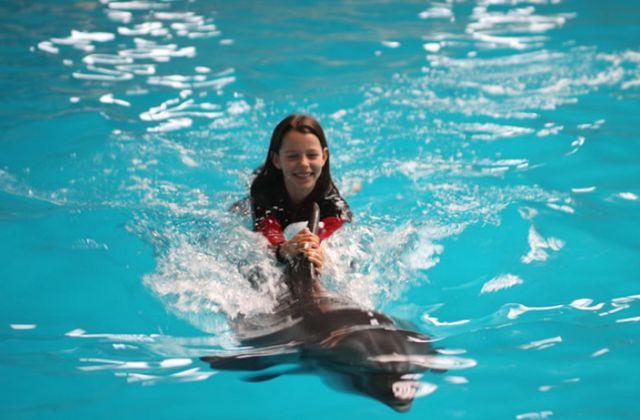عروض الدلافين في اسطنبول
