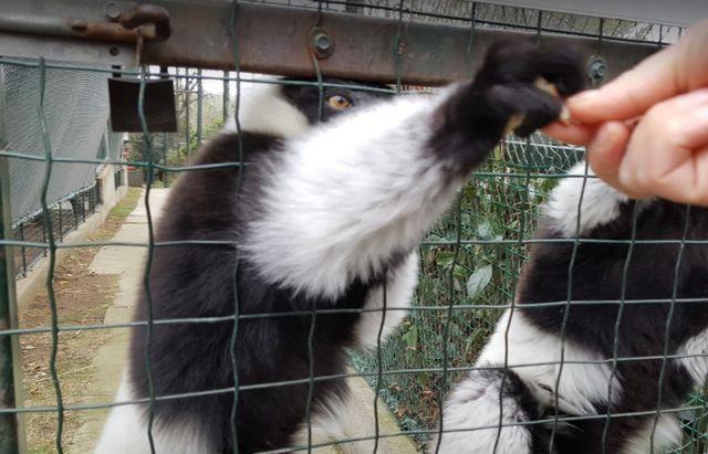 حديقة حيوانات اسطنبول