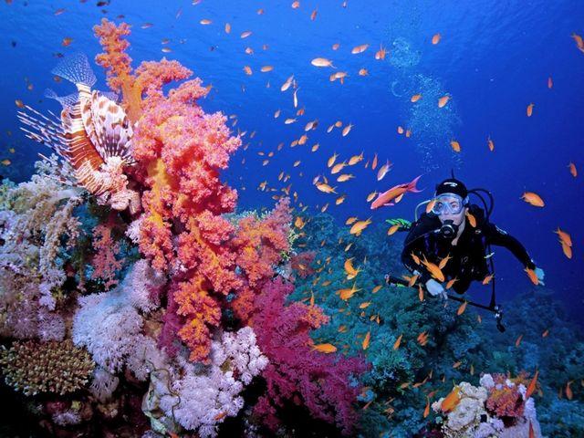 الشعاب المرجانية في شرم الشيخ