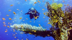 الغوص في شرم الشيخ