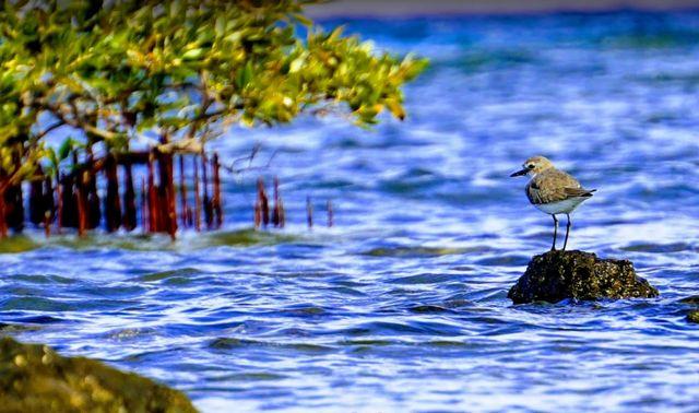 خليج نبق شرم الشيخ