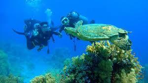مراكز الغوص في شرم الشيخ