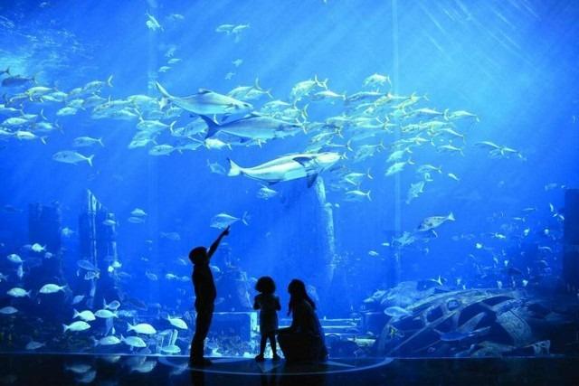 يضم فندق اتلانتس في دبي 16 مطعم ومقهى مُختلفين