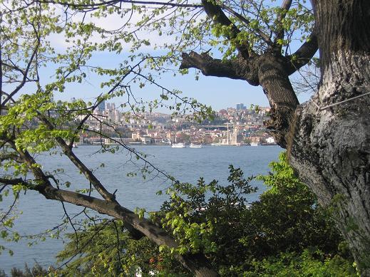 تمتزج الأشجار مع الأزهار في حديقة فتحي باشا اسطنبول لتكوين مكان رائع